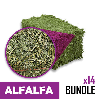 Small-Square Bale of Alfalfa in 14 Bale Bundles