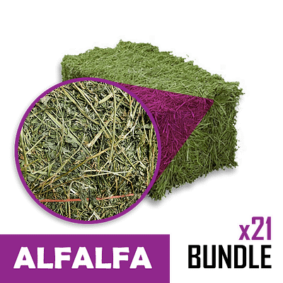 Small-Square Bale of Alfalfa in 21 Bale Bundles